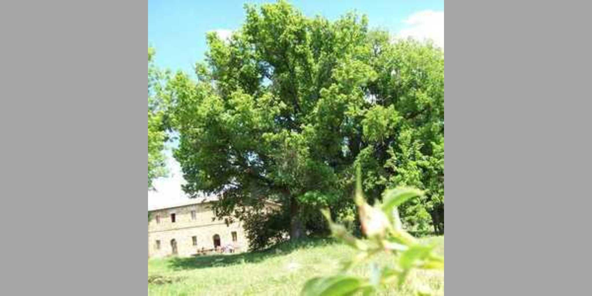 Bed & Breakfast Radicondoli - Colline Senesi_2