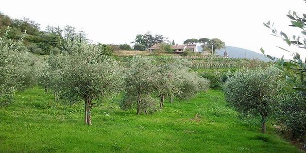 Appartamento Cinto Euganeo - Borgo Cornoleda